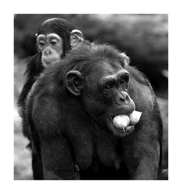 Affenbaby auf dem Rücken