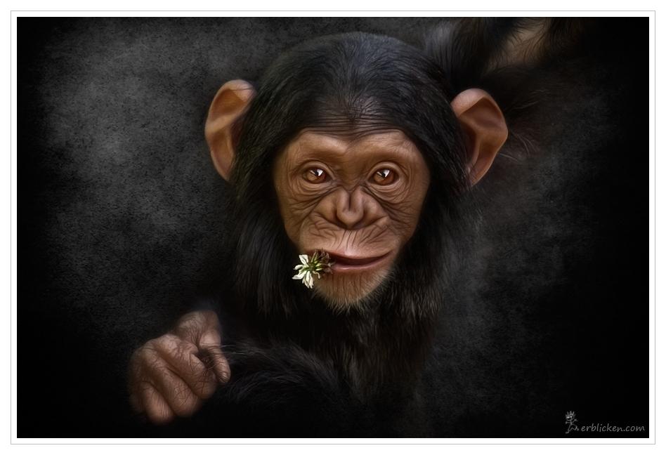 Affenbande I