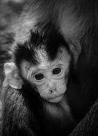 Affenfamilie in Thailand