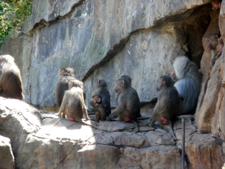Affenfamilie um die Mittagszeit