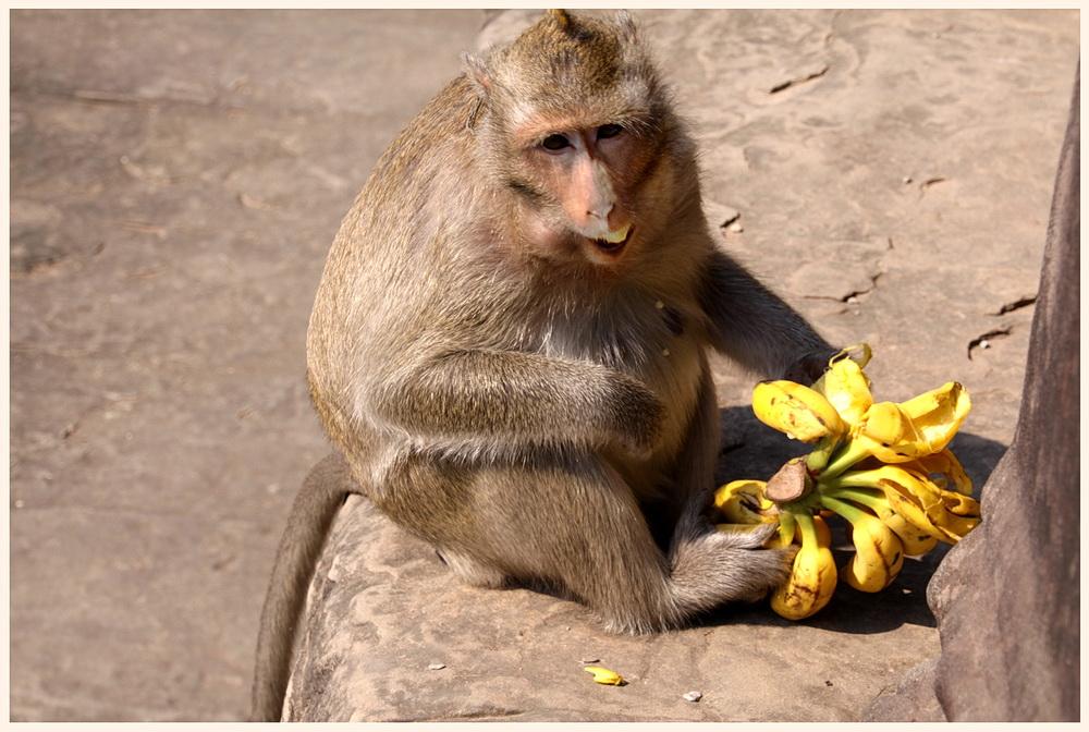 Affenflink