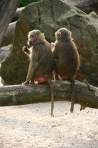 Affenfreunde