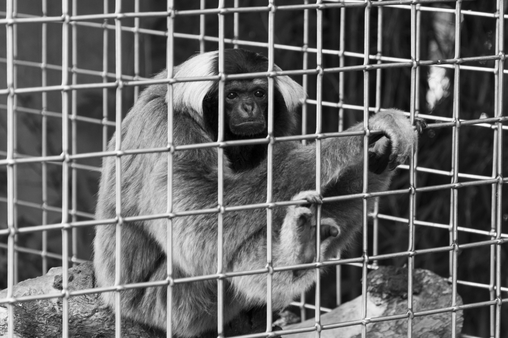 Affenkäfig