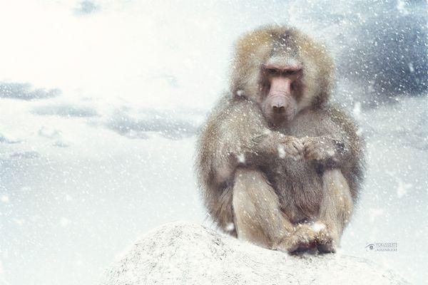 Affenkälte