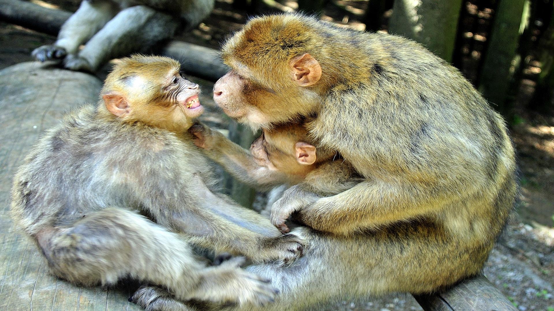Affenkontrolle