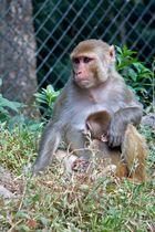 Affenmutter und Kind