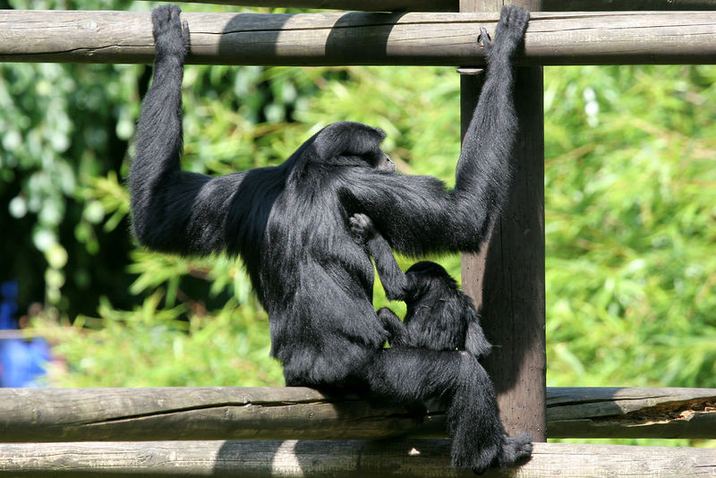 Affen(mutter)liebe