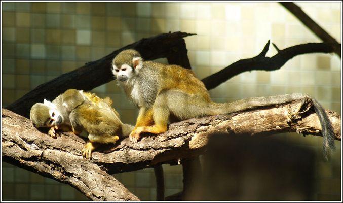 Affenpärchen mit Nachwuchs