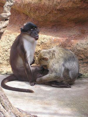 Affenpflege