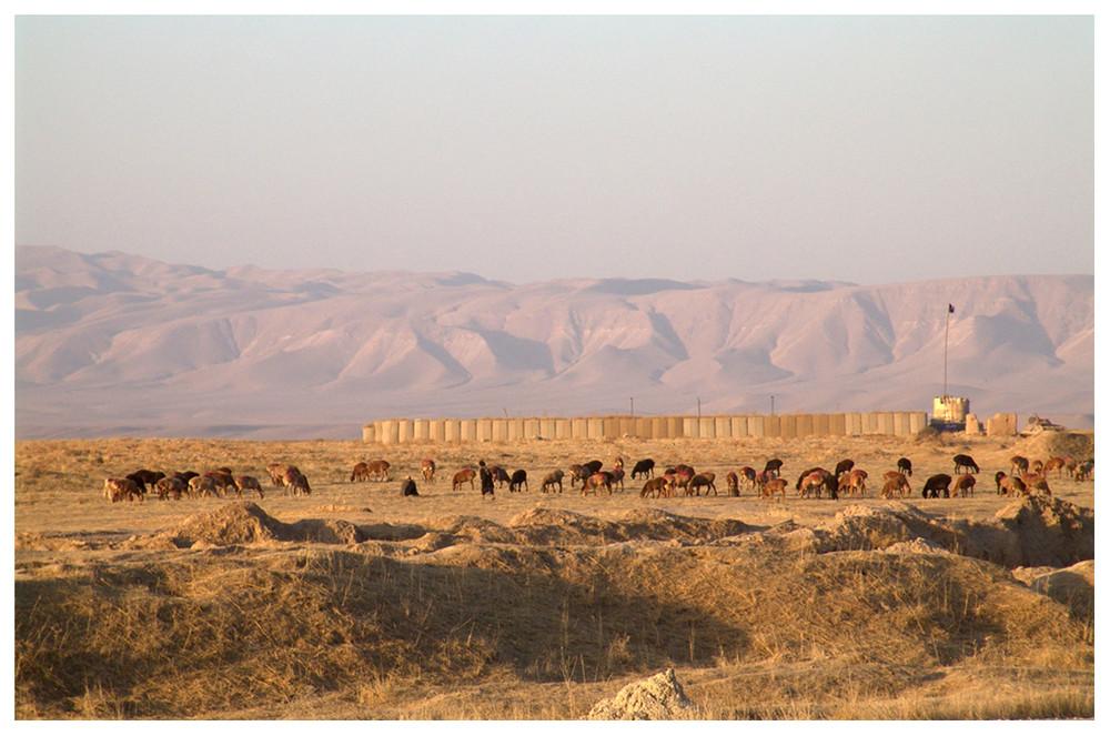 Afghanistan XVIV, Schafe hüten