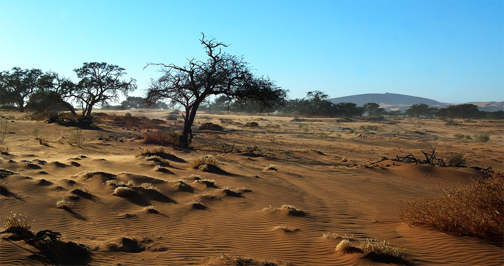 ...Africa...