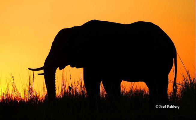 ... Africa feeling