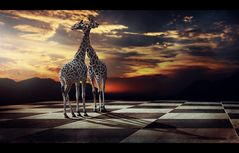 * african chess *