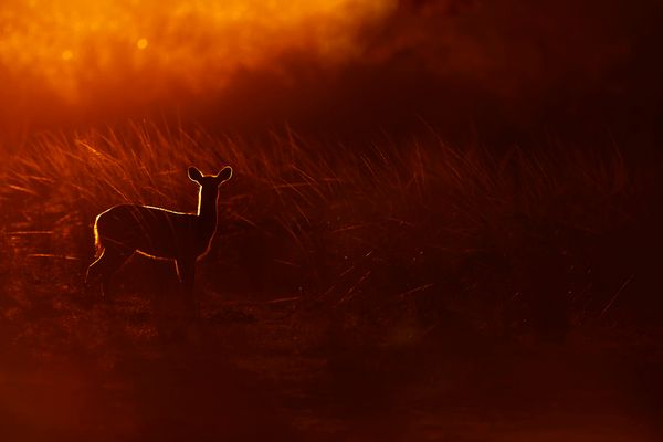 African Silhouette