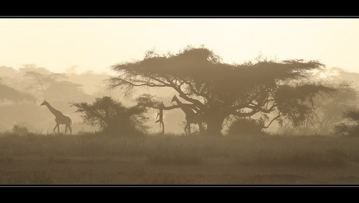 African Sunset *Reload*