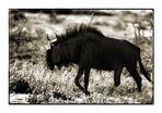 african wildlife VI