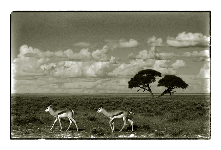 african wildlife VII