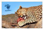 AfriCat Foundation Namibia