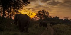 Afrika ist für die Seele - Elefanten im Sonneruntergang