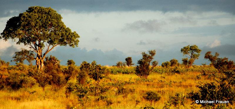 Afrika Stimmung