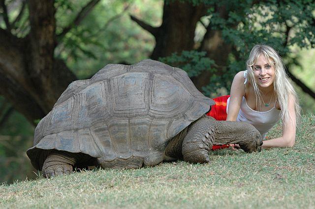 Afrika Wildlife 2