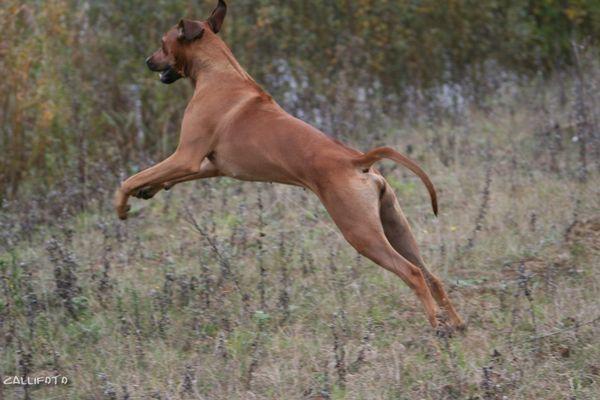 afrikanischer Springhund ;-)