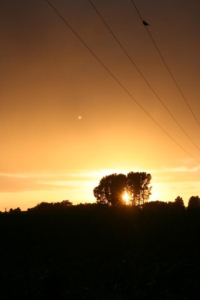 Afrikas Sonne mitten in Batenhorst