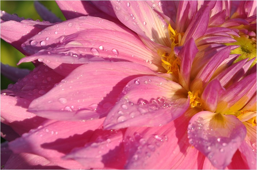 After the rain ....