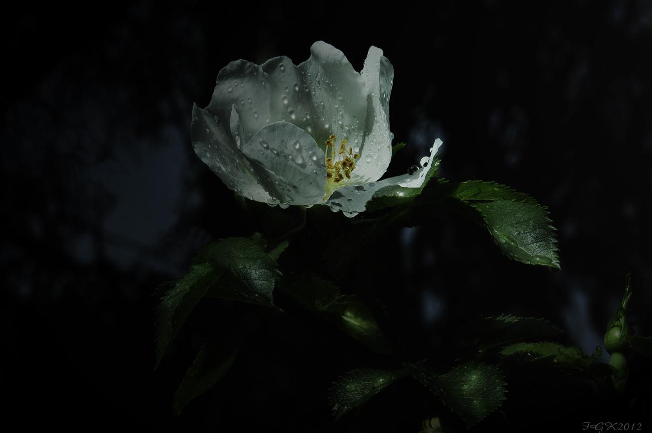 After The Rain ( Despues de la lluvia ) A Elvina Benoist