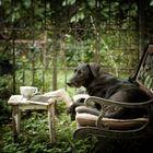 *afternoon tea*