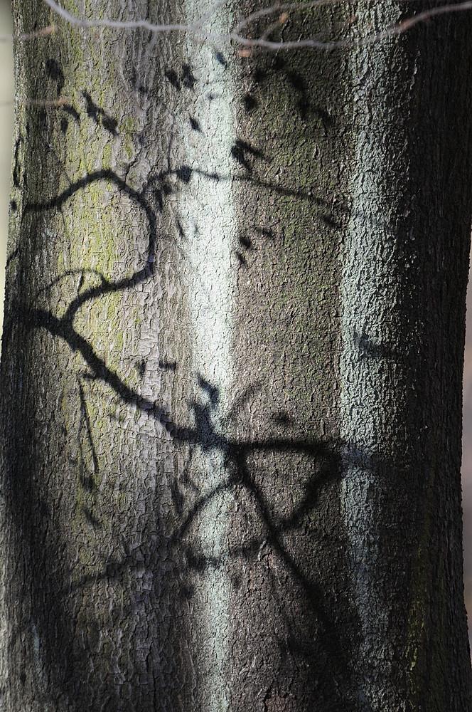 AG für Bäume 1
