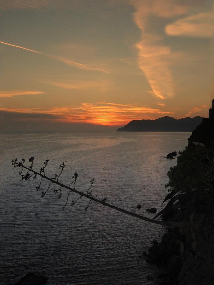 agave al tramonto