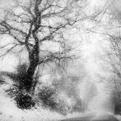 Agghiacciato tremar tra nevi algenti...