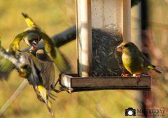 Aggro Birds