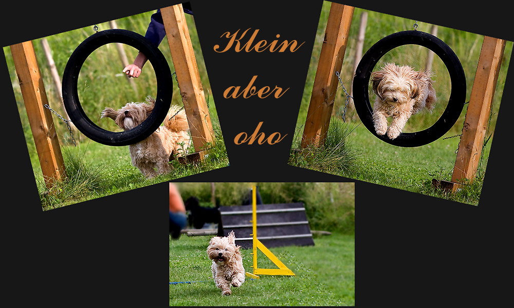 Agility für Hund und Halter