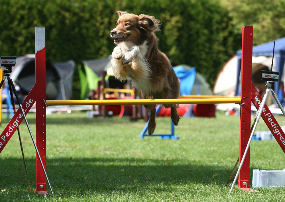 Agility-Turnier in Lage/Lippe