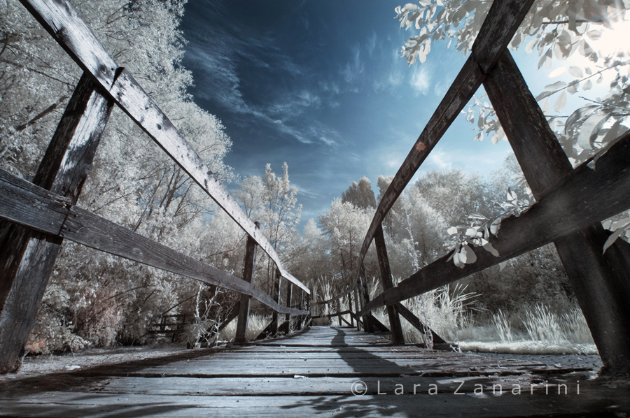 """Agorà/Sotto i riflettori: """"il bosco incantato"""" - 2."""