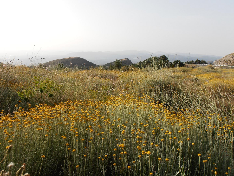 Agosto en Sierra Nevada