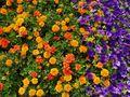 Agradecimiento Floral von Felipe Riquelme