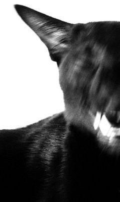 agressiv cat