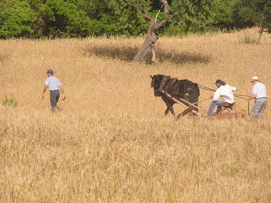 Agriculture Traditionnelle Vivante