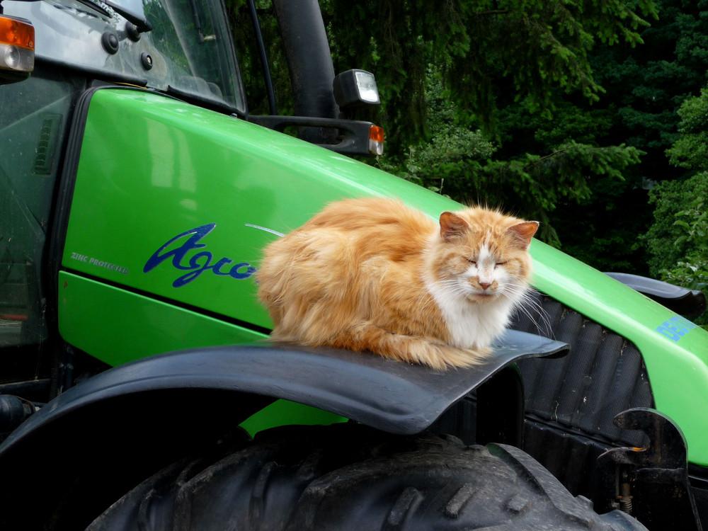 Agro-cat