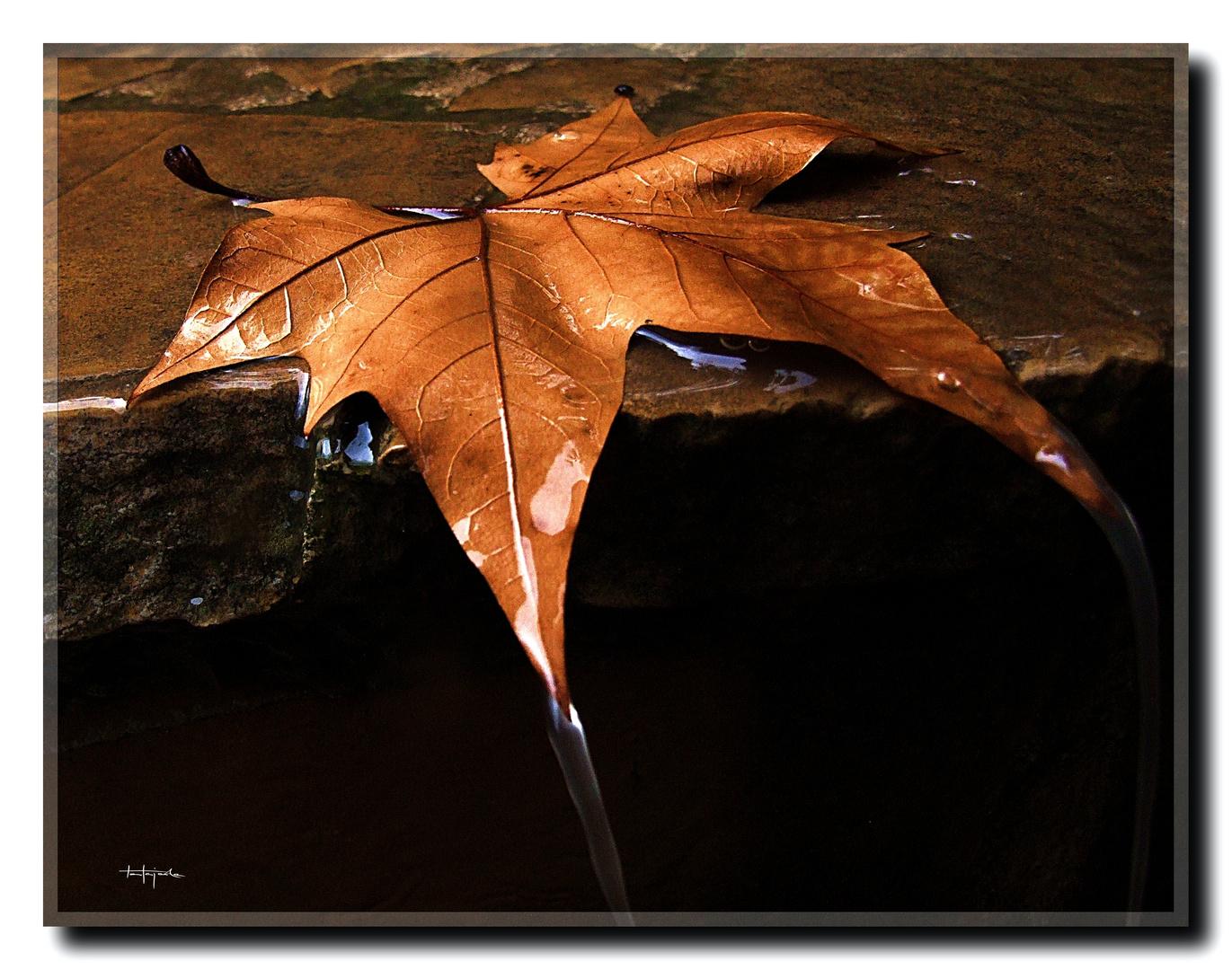 Agua de otoño