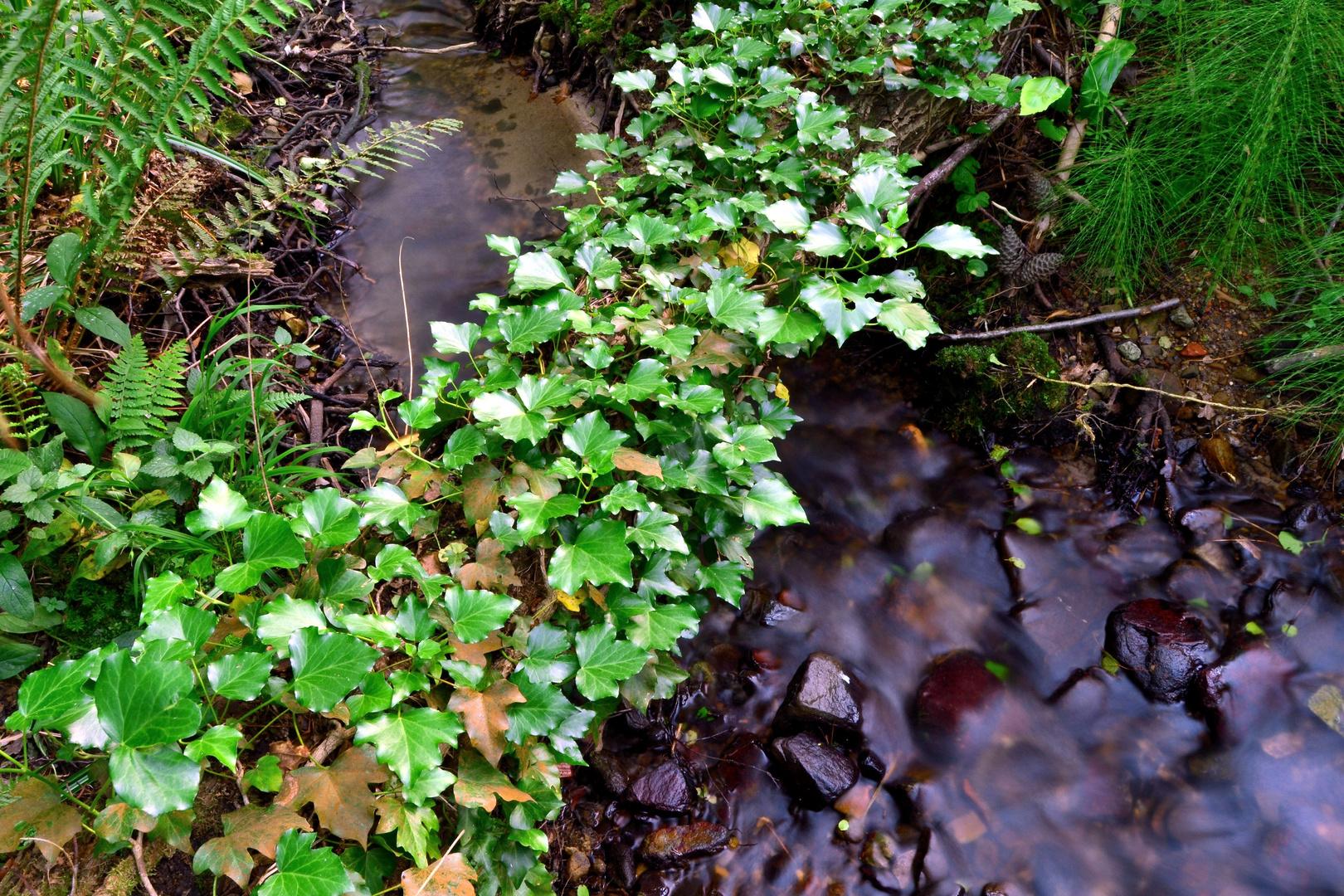 agua y verde