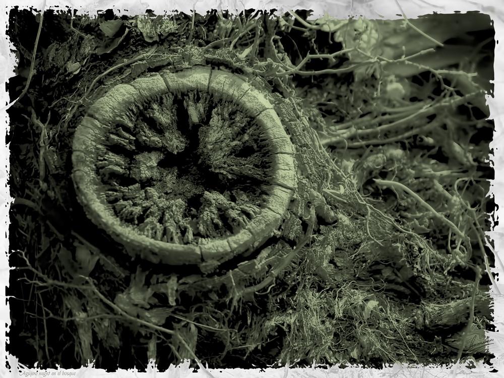 Agujero negro en el bosque