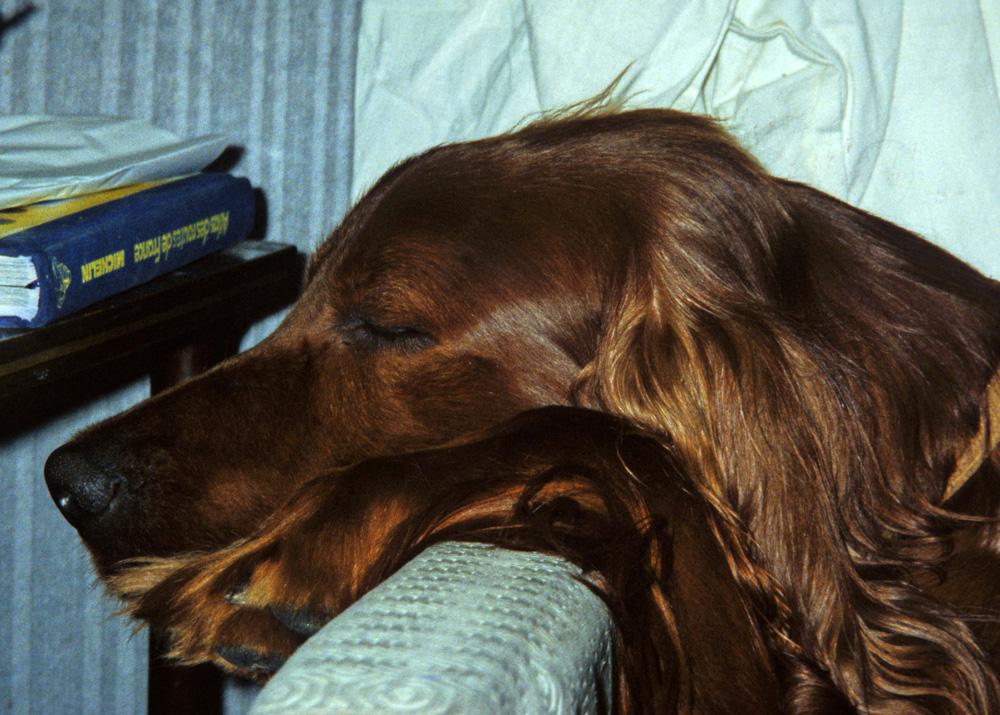 Ah !! Quelle vie de chien !