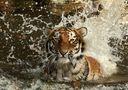 Ahimsa im Wasser von Frank Wil.