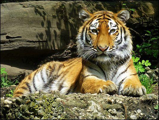 AHIMSA - Zoo Duisburg