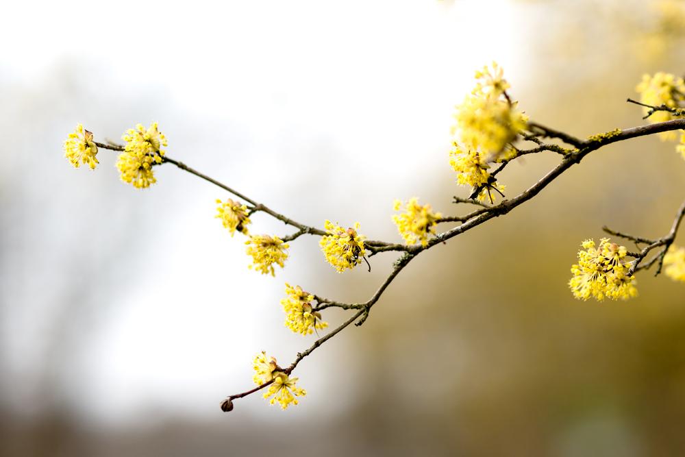 Ahnung von Frühling