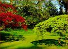 Ahornbäume mit verschiedenfarbigem Blattwerk